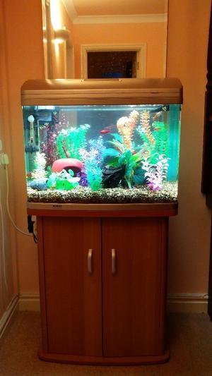 Aquarium with tropical fish