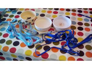 Puppy bowls and leads in Emsworth