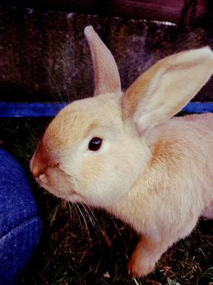 Lovely rescue rabbit for sale.