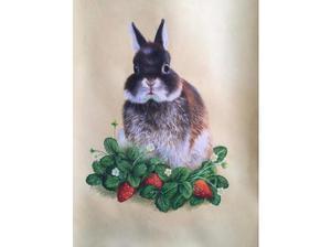Dwarf rabbit (male) Wanted in Kendal