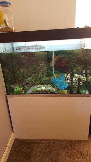2 mud turtles and fully functioning aquarium posot class for Fish tank set up