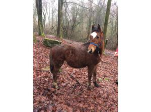 Poppy yearling filly in Mountain Ash