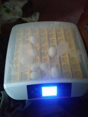 56 egg incubator