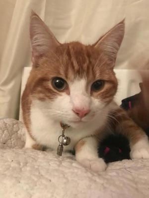 kittens box