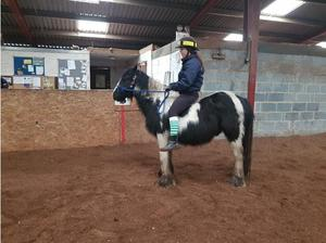 Rising 5yr old 12.2hh Coloured Cob Gelding in Swindon