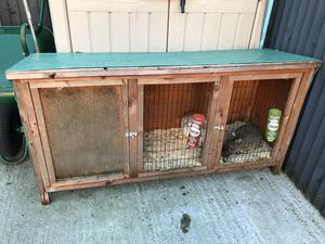 2 X male rabbits for sale (hutch included in sale