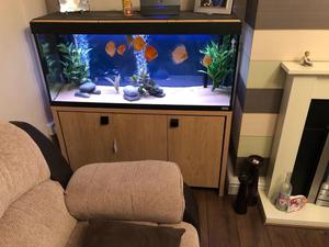 Roma 240 and discus tank