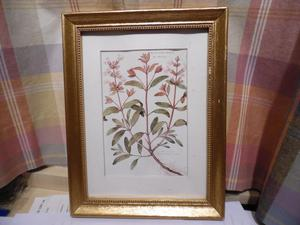 A Pair of FRAMED PICTURES of flowers