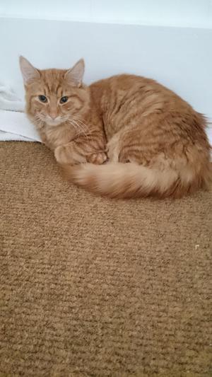 average age of indoor cat