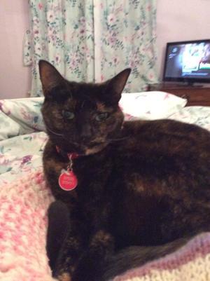 Tortoiseshell cat seeks a new home
