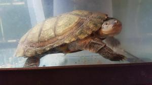 Turtle & Tank For Sale