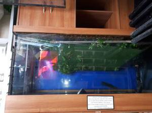"""72"""" x 30"""" x 32"""" (LWH) Fish Tank with Hood & Stand"""