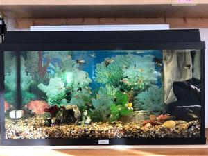 2 JUWEL FISH TANK+FISH FOR SALE £120