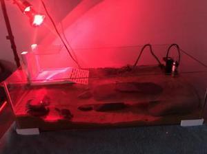 Turtle tank setup plus musk turtle