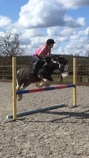 5 year old coloured cob