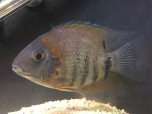 Fish tank fish and accessories for sale