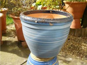 large plant pot in Brackley