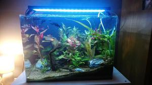 Aqua One Fish Tank Live Tank With Fish