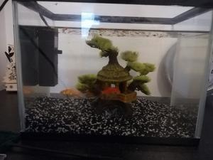 Small fish tank with goldfishes