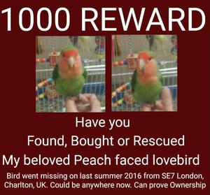 Do u have this lovebird? Will be bought back