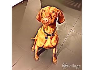 Dog walking, running and pet feeding in Nottingham