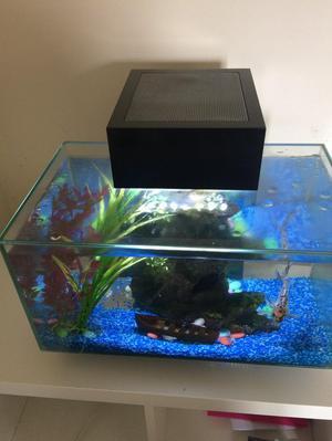 Fluval aquarium with two fish