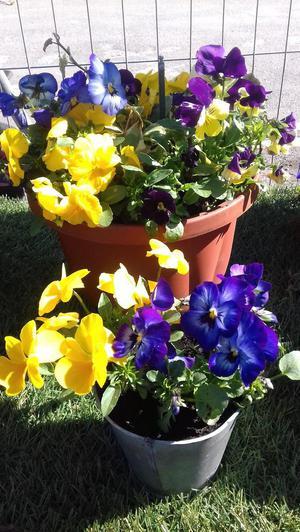 Plants, Planters, Trellis, Bird Boxes, Plant Trays, Etc -