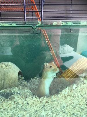 2 lovely Gerbils looking for a loving home