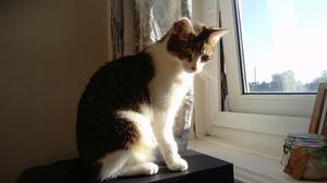 Lovely kitten. For a good home.