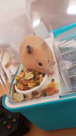 Female Hamster and cage