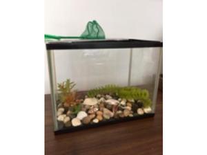 Fish tank&Fish in Basildon