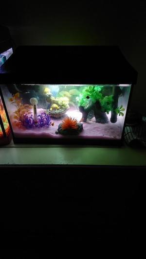 25 litre aquarium with fish