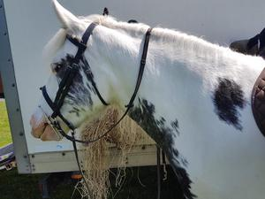 Traditional blue and white gypsy cob