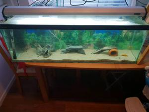 Clear seal 4ft fish tank with tropical fish