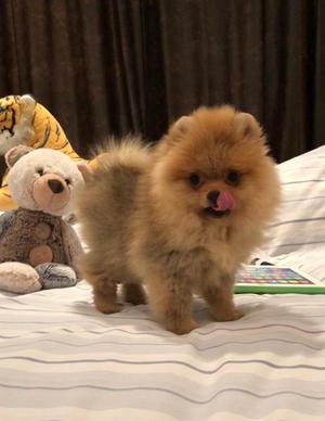 Beautiful Boo type extra fluffy teddy bear miniature