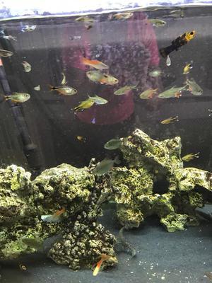 Tropical fish for sale job lot