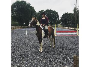 4 Year old coloured Gelding in Norwich