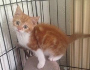 Kitten for a forever home
