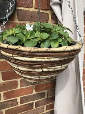 Hanging baskets corn rope filled with Busy lizzies