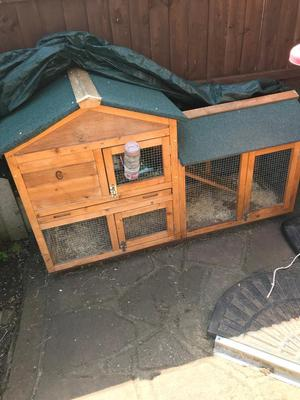 2 tier hutch, male guinea pig and run