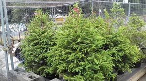 Plants, Planters, Hanging Baskets, Bird Boxes, Plant Trays,