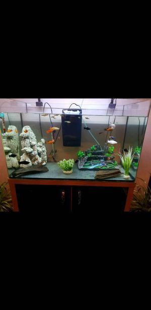 Aquarium with stand and all equipment