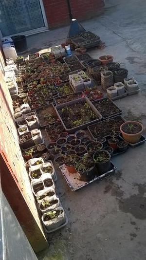 30p Potted Vegetable/Fruit Plants