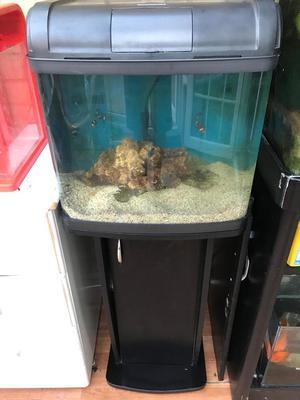 Marine fish tank with stand 2 clownfish and purple mushroom
