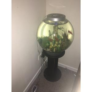 3 gold fish, fish tank and stand. All in good condition