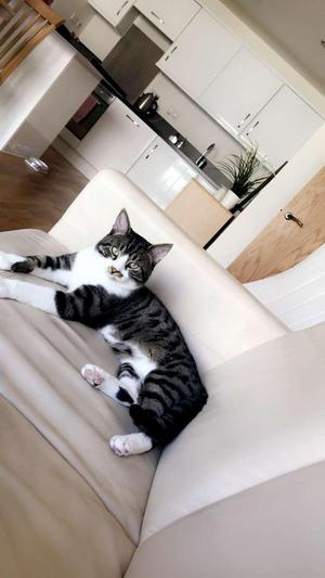 Cat - needs a loving forever home