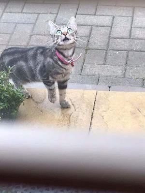 Female cat 3 years old needs loving new home