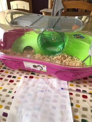 2 sets of 2 female roborovski hamsters 7 weeks old with cage