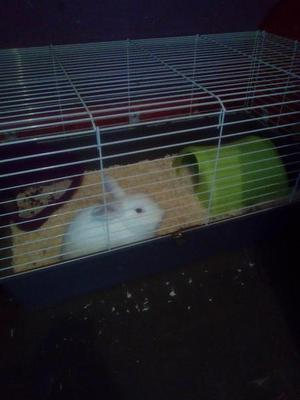Rabbit with indoor cage and other items