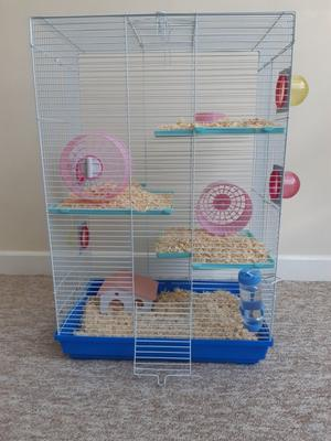 Hamster, 5 months old and 3 storey cage £35